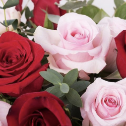 12 PINK AND RED ROSES !