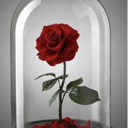 FOREVER ROSE LOVE