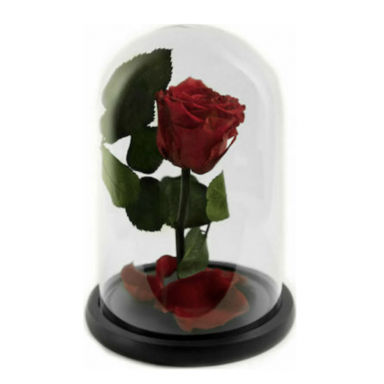 FOREVER ROSE LOVE .