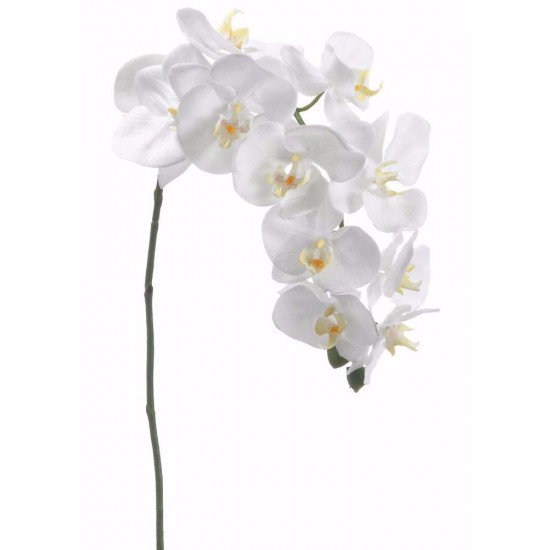 3 WHITE PHALAENOPSIS PLANTS IN A BASKET